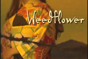 Weedflower by Cynthia Kadohata [in Bloomsbury Review]